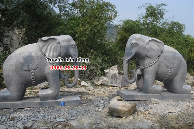Mẫu voi quỳ đẹp